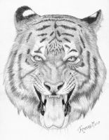 Tiger 2 by Mixaoops