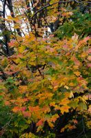 White Mountains  Fall Foliage  151 by FairieGoodMother