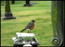 Cemetery Bird 2 by SalemCat