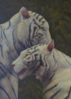 White Tigers - Tenderness by AldemButcher