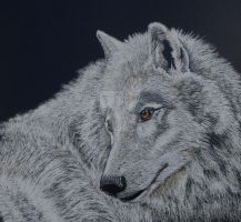 Arctic Wolf by graphiteimage