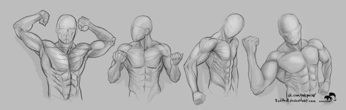 Study shoulders hands torso by RedBast