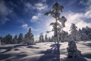 Light in Winter by LG77