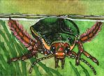 [ACEO #17] Great Diving Beetle by agataylor