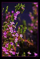 Purple Shades of Grace by TeaPhotography