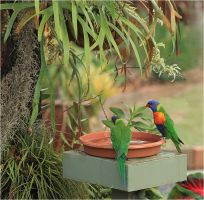 Rainbow Lorikeets In Our Garden by Firey-Sunset
