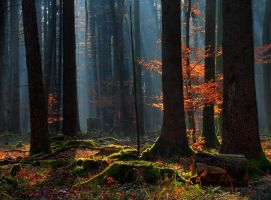 Fall Forest II by Yamata-Orochi