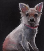 Chihuahua by Paintwick