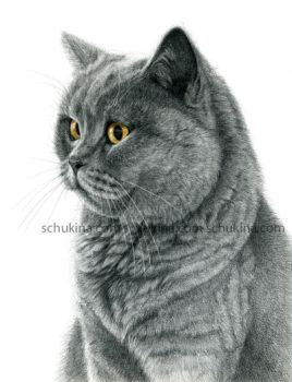 Chartreux cat portrait G112 by sschukina