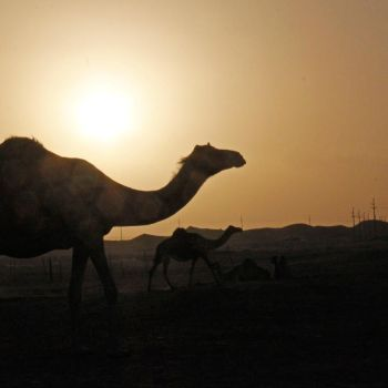 What makes the desert beautiful? by ghazayel