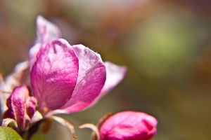 Macro Garden Flowers XXI by Witch-Dr-Tim