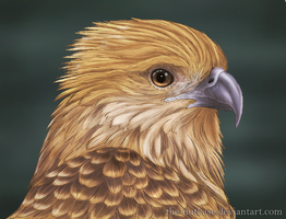 Whistling Kite by The-Nutkase
