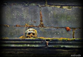 The Skull That Guards The Cemetery by Estruda