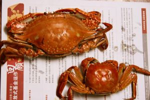 Day 260: Crabs by coolwanglu