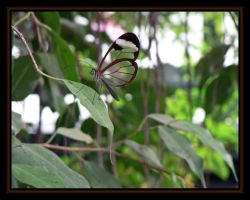 Negligee Butterfly by magpie-poet