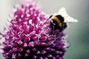 Flower and the Bee by Callumsart