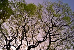 Trees in a warm afternoon by ldeseta