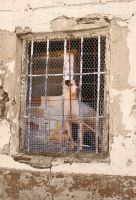 JailHouse Dog by olones