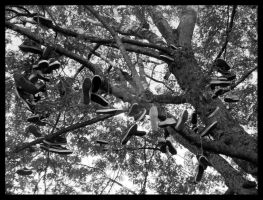 Shoes go on trees... by rockgem