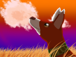 Tieco's sunset by Finchflight