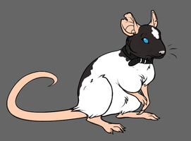 My rat self by Cayleth
