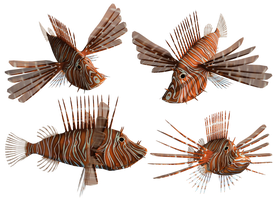 Lion Fish PNG Stock by Roys-Art