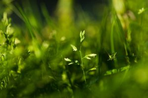 green on green by SilenceOfNature