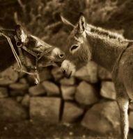 Donkey love by ruthsantcortis