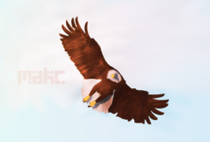 Eagle by Imakc