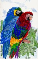 Macaws together in Paradise by hidden-by-art