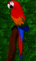 Red Macaw by Sorceress2000