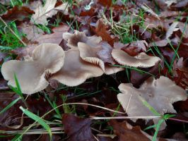 mushrooms 2014 39 by harrietbaxter