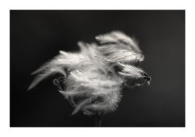 There is light... by Ikabe
