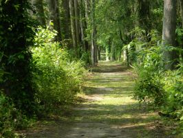 Path Beside the Swamp by JennyM-Pics