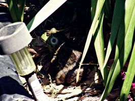 Buford the Bullfrog 2 by JeremyC-Photography
