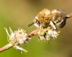 Bee 5 by mateuszskibicki1
