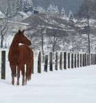 horse in the snow by Nexu4