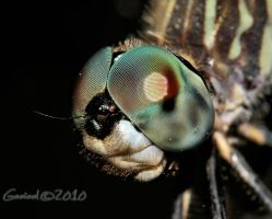 dragonfly_2010 by Gooiool