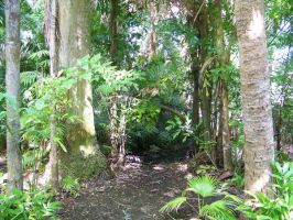 Sarasota Jungle Gardens 9 by Tilt-Stock