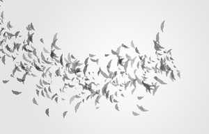 Feather Photoshop Brush by LimeSoftSolutions