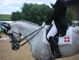 Dressage 20 by equinestudios