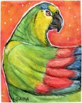 Blue Fronted Amazon Parrot by TigresaDaina