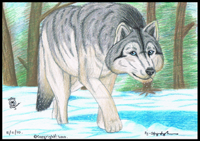 Realistic-wolf-traditional by Catbirdwoman