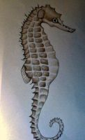 Colour Drawing Seahorse by SarahStar123