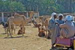 The camel market by Nile-Paparazzi