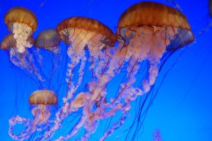 jelly fishes by thevictor2225