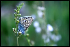 Sweet Butterfly by FlorentCourty