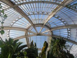 Ceiling of the Palm House by cR11