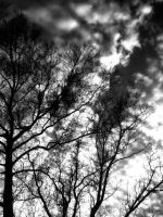 Fall Sky, Black and White by MimiVengeance