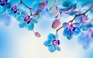 Orchids Flower Background by wallpx